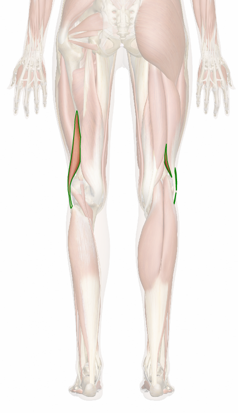 Vista 6 Bíceps femoral porción corta