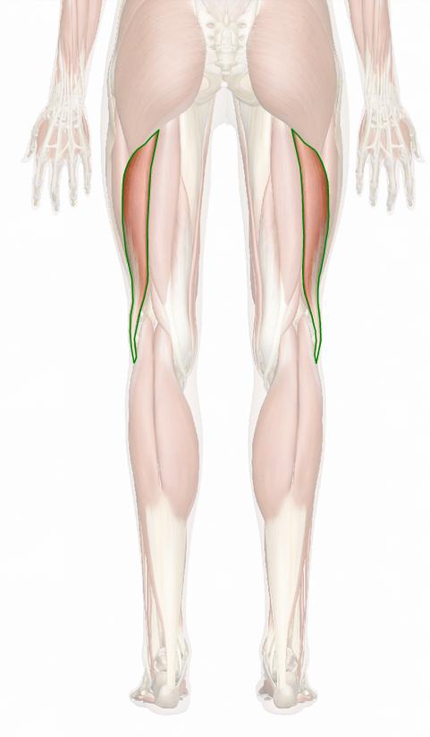 Vista 5 Bíceps femoral porción larga