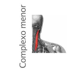 Músculo Complexo menor