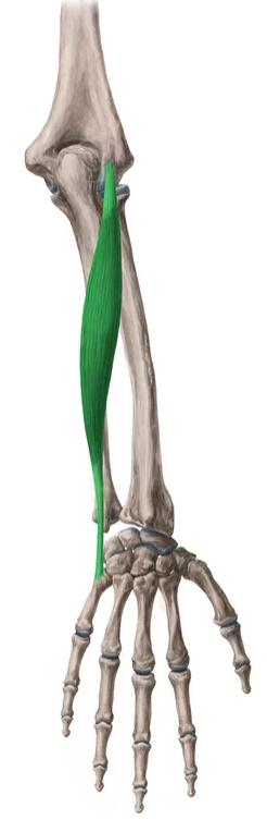 Vista1 Cubital posterior