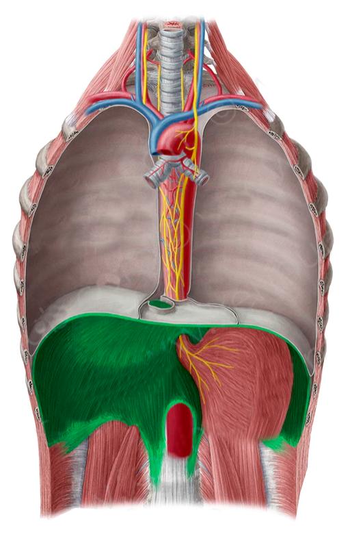 Vista 1 Diafragma