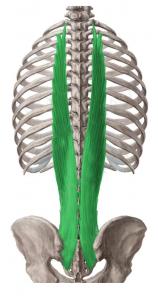 dorsal-largo-2