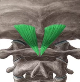 dorsal-menor-cabeza