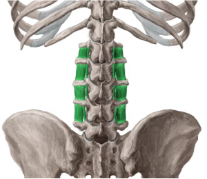 intertrasverso-lumbar
