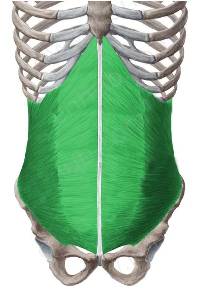oblicuo-menor-del-abdomen