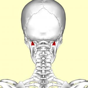 Vista 2 Recto lateral