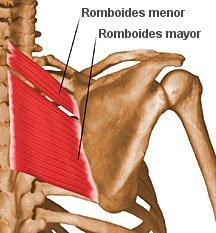 rhomboids2